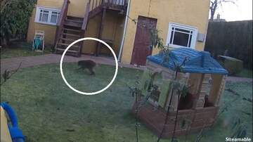 image for Watch: Strange Tailless Mystery Creature Filmed in Vancouver Backyard