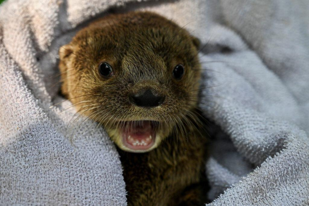 Someone Put A Sax Soundtrack To An Otter Video, It's The Best Thing To See | Brian Fink | 93.3 FLZ