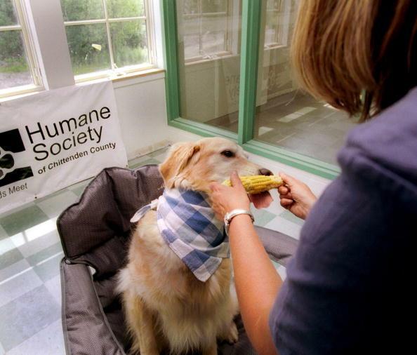 Wellness Shot: Can You Give Your Dog Kale? | Martha Quinn | iHeart80s @ 103.7