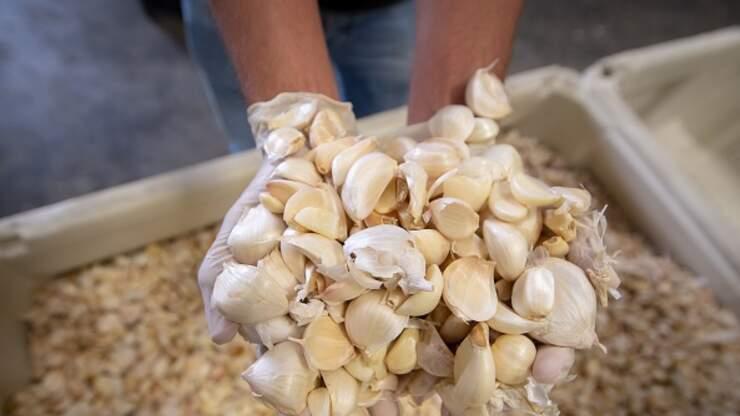 Gilroy Garlic Festival Canceled