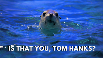 image for Distraction of the Day: Sea Lion Scream Sounds like Tom Hanks