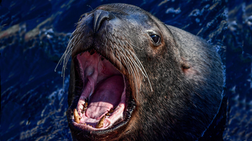 image for This Sea Lion Yells Just Like Tom Hanks