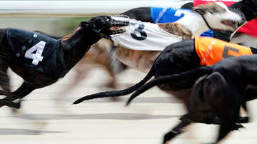 image for Florida Kennel Club Announces Layoffs after Greyhound Racing Ban