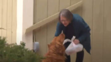 image for Golden Retriever Delivers Groceries To Quarantined Neighbor