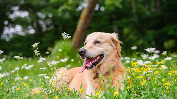 (WATCH) Dog Delivers Groceries To His Self-Quarantining Neighbor | 104.3 MYFM | Nina Chantele