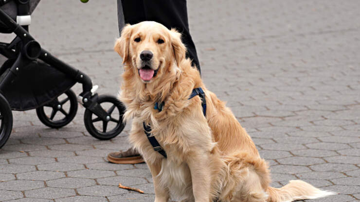 Dog Delivers Meals To Quarantined Woman | iHeart80s @ 103.7 | Martha Quinn