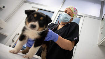 image for Arizona Will Allow Veterinarians To Use Telemedicine To Examine Pets