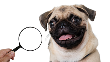 image for Only The Biggest Dog Lovers Can Spot The Hilarious Pug In This Photo