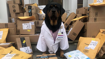 image for DOGtor Loki is a Therapy Dog Turned Delivery Pup for Healthcare Hero Kits