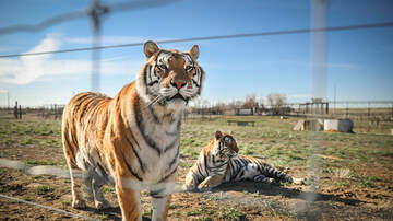 image for Tiger King's Zoo Awarded To Longtime Rival