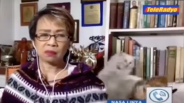 image for Vicious Cat Fight Erupts Behind Reporter During Live News Report