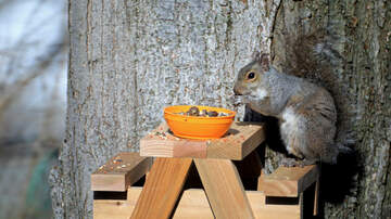image for Sarasota man builds tiny tables for squirrels