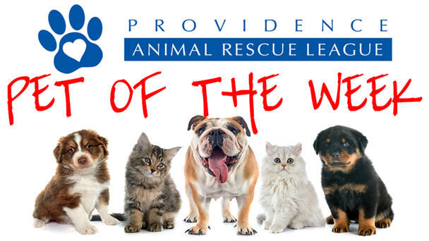 Meet Our Providence Animal Rescue League Pet of the Week!