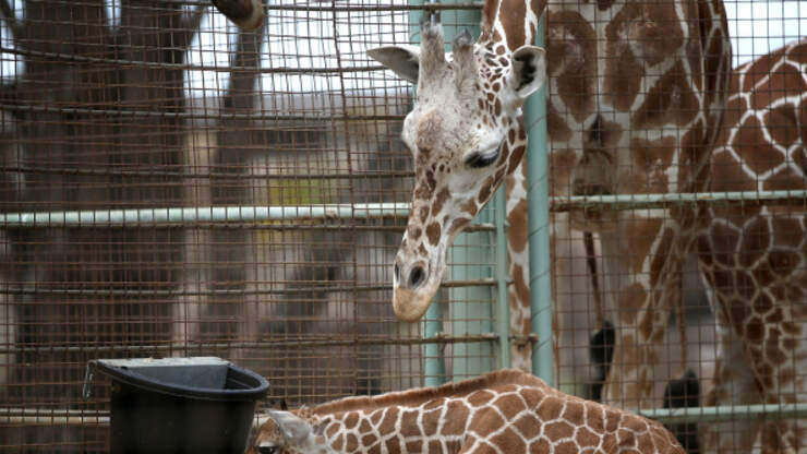 San Francisco Zoo Set To Reopen June 29th