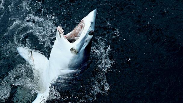 Conservationists Try To Cancel Newburyport Shark And Tuna Tournament