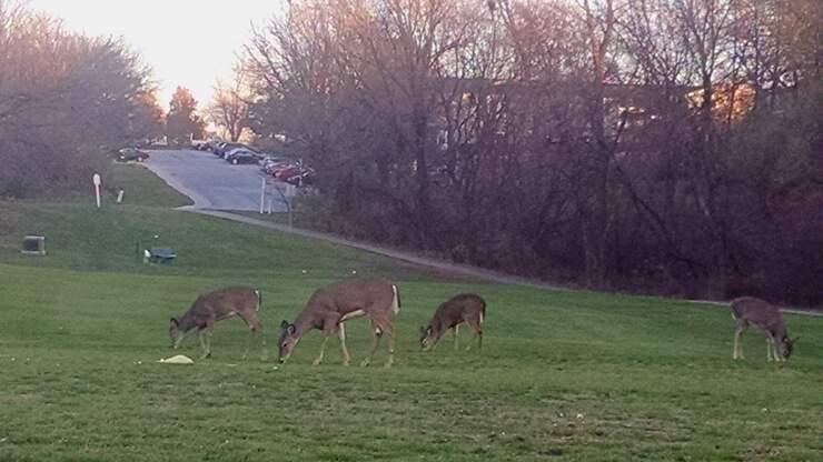 Deer archery season begins in Iowa today
