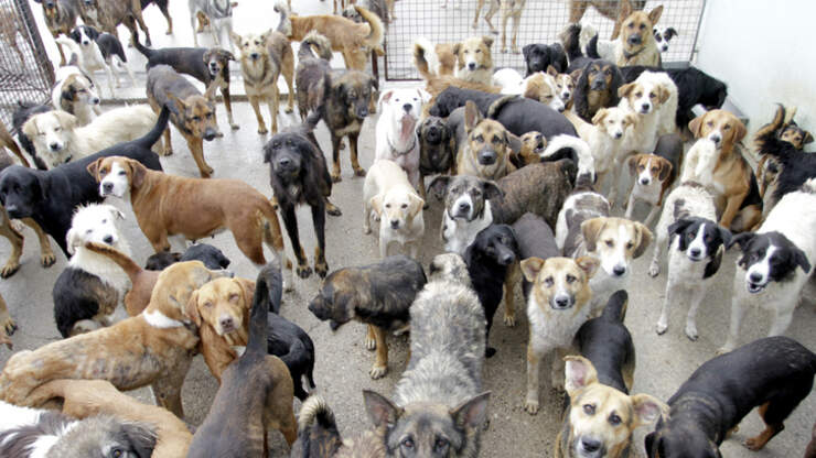 Mexican Man Fills Home With 300 Dogs To Protect Them From Hurricane Delta