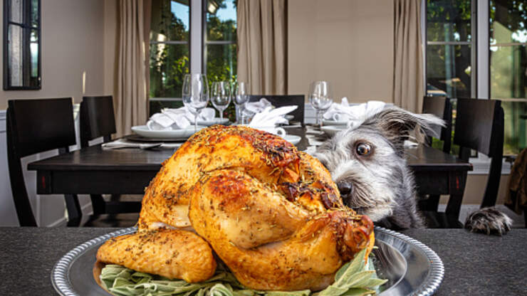 These Are The Four Thanksgiving Foods You Shouldn't Give Your Dog