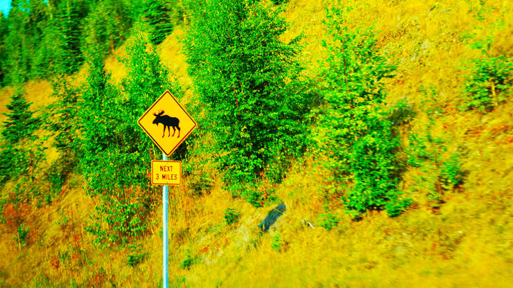 Why Did The Moose Cross The Interstate? Because He/She Could...Safely