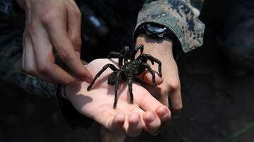 image for HUGE Spider Terrorizes Girls While Driving