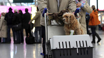 image for Proposed Rule May Ban All Service Animals Except Dogs From Flying
