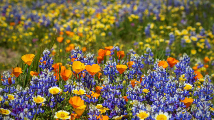Are You Looking For The Most Beautiful Blooms In California?!