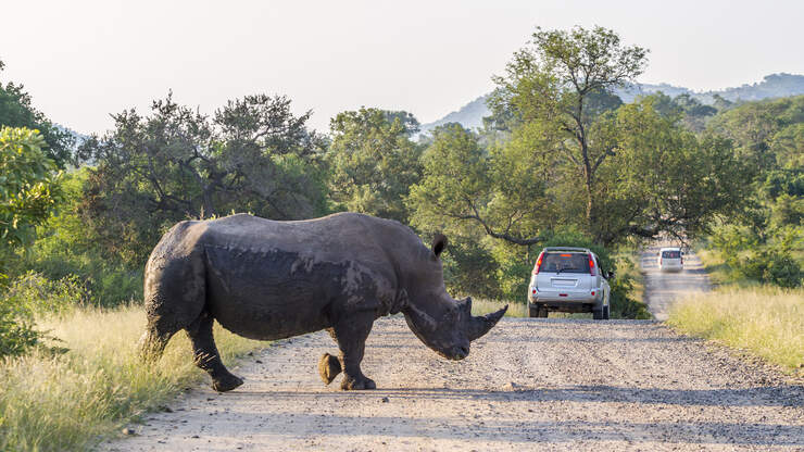 Rhino Completely Demolishes Car In Terrifying Attack