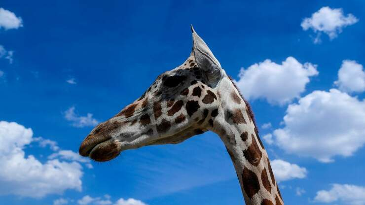 Vote For Florida's Safari Parks In National Competition