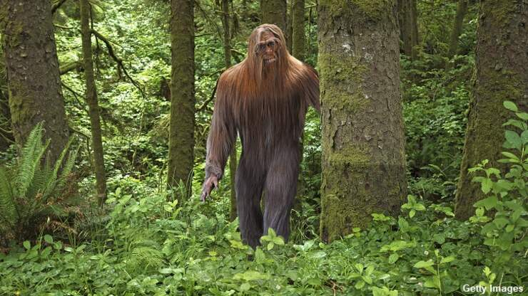 Hudson Valley Woman Reports Series of Strange Sasquatch Sightings