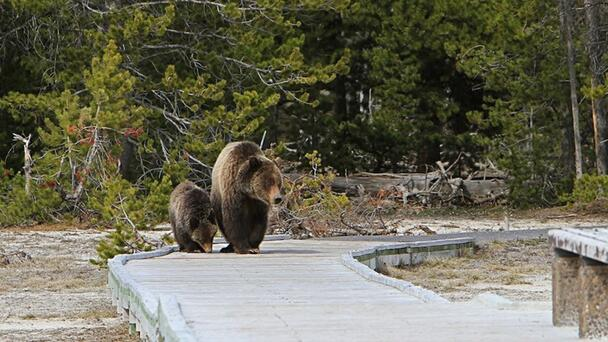 National Park Service Warns Visitors Not To Push Friends Into Bears