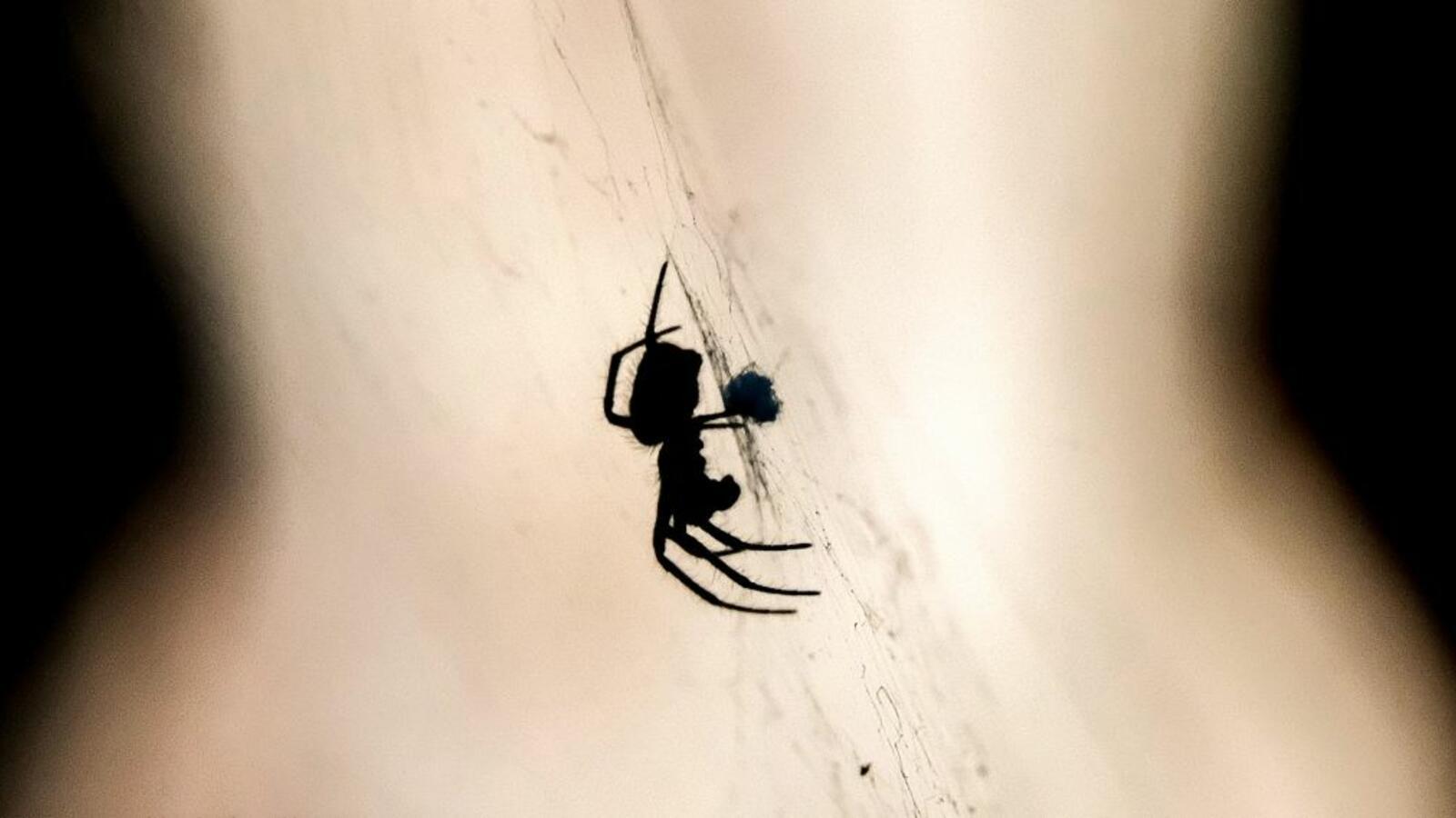 Huge Huntsman Spider Drops on Pilot as Plane Lands [VIDEO]