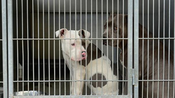 Families Needed! The Humane Society of Weld County Is At Capacity
