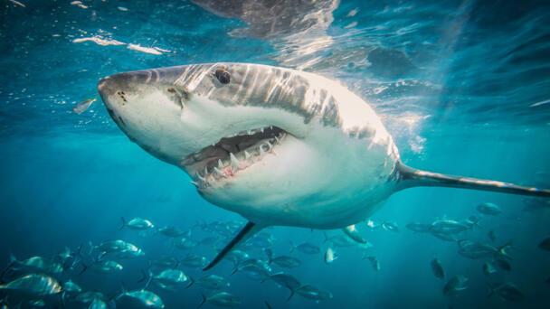 Teen Likely Bitten By Shark At North Carolina Beach, Officials Say