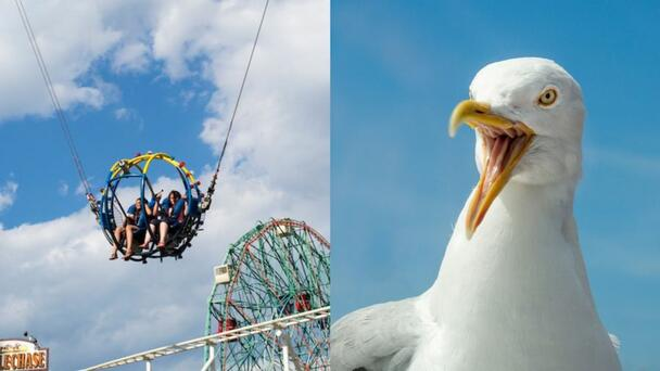 WATCH: Teen On Amusement Park Ride Gets Smacked In Face By Flying Seagull