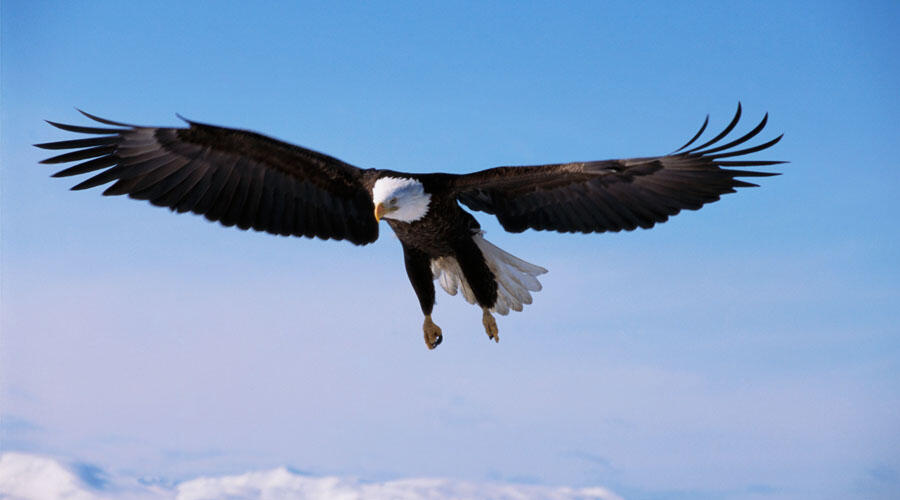 PHOTOS: Intense Bald Eagle And Hawk Fight Captured By Colorado Photographer | iHeartRadio