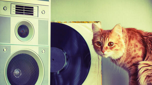 Guy Got Complaints Because of a Loud Stereo. He Wasn't Home It Was His CAT.