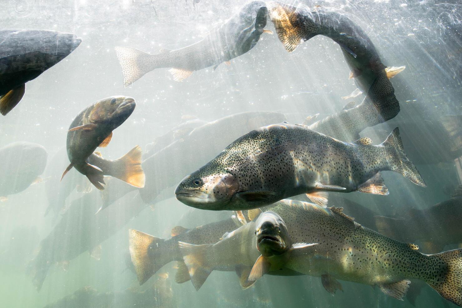 Fishes Swimming Underwater