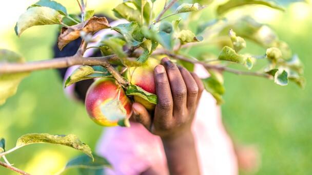 Farm Calls Cops On Black Couple Over 6 Apples