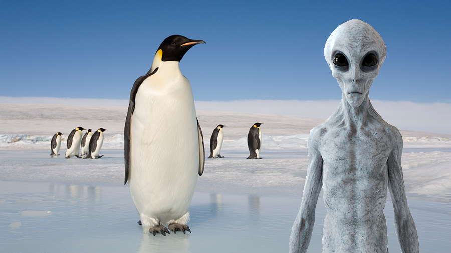 New Evidence Shows Penguins Might Actually Be Aliens   iHeartRadio