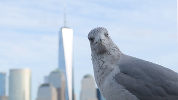 image for Hundreds Of Dead Birds Found At World Trade Center