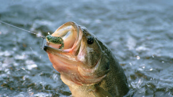 Governor Hochul Announces Free Fishing Day in New York