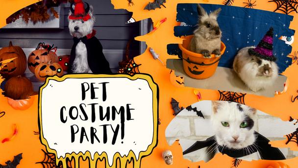 A Pet Costume Party Contest