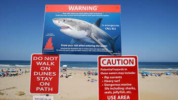 Local News - Increase In Shark Sightings Leaves Officials Looking For Solutions