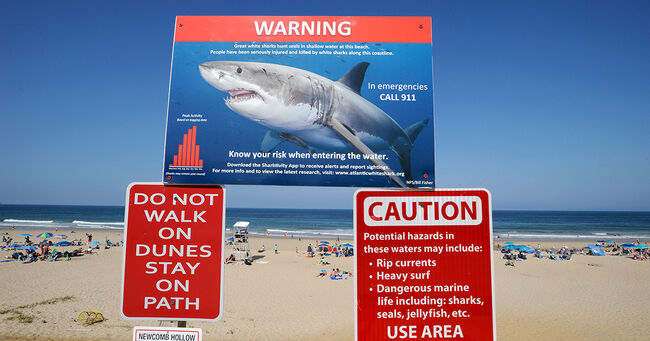 Increase In Shark Sightings Leaves Officials Looking For Solutions