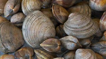 Local News - Warming Hurting Shellfish, Aiding Predators, Ruining Habitat