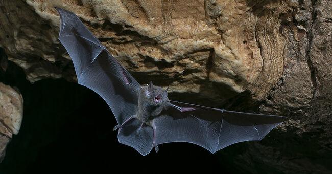 Bat Interrupts Newton City Council Meeting Wrko Am 680