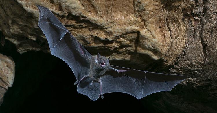 Bat Interrupts Newton City Council Meeting 1017 The Bull
