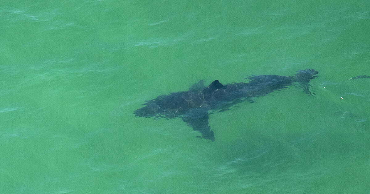 More Than 100 Beach Closures Due To Shark Sightings