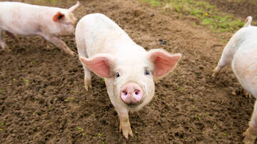 The Big Show - ISU: China market a potential boon for US pork