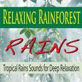 Midday Rainforest Rain Burst